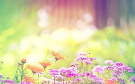 Wallpapers Summer Flowers Wallpaper Cave Free Flower Backgrounds Wallpaper Cave