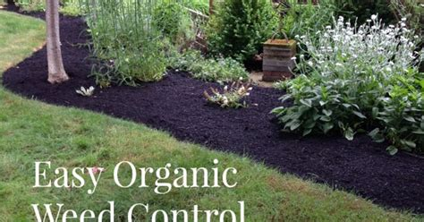 Organic Weed Control Tips Idea Box By Jami An Oregon How To Keep Grass Out Of Vegetable Garden