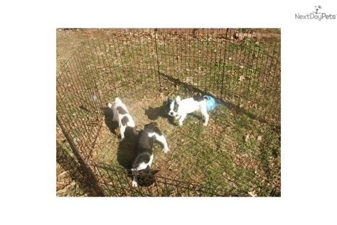 pug puppies for sale in nc cheap about bulldog puppies for cheap shelters