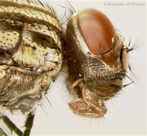 do house flies bite house flies eggs www pixshark com images galleries with a bite