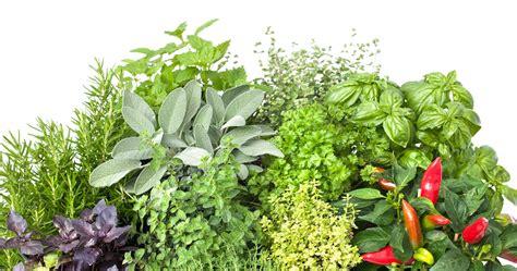 herbes cuisine les fines herbes incontournables blogue de l 201 picier
