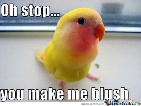 Bird Meme - funny birds askideas com