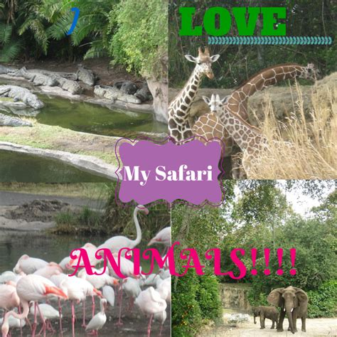 A Marvelous Take On The Safari Look With Out Of Africa by Niche Parent Conference 2014whollyart