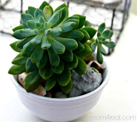 bug resistant cactus plants ideas for planting succulents the graphics