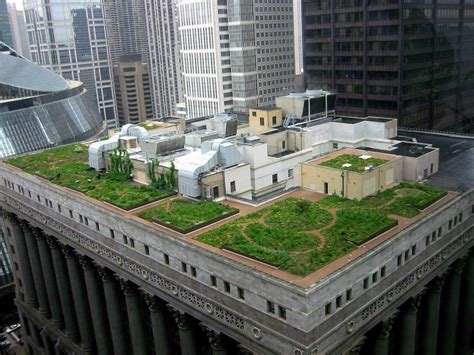 green roof green roofs leading to green cities little forks