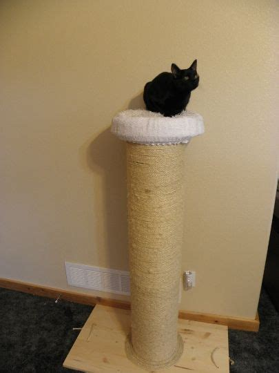 cat scratching post   cat weight loss device