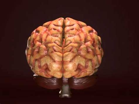 daño al cerebro por consumo de alcohol youtube