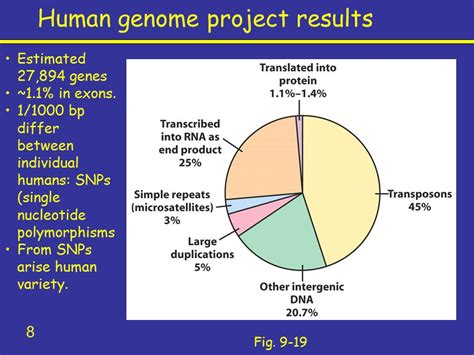 section 13 2 the human genome project cloning genomes and proteomes ppt video online download