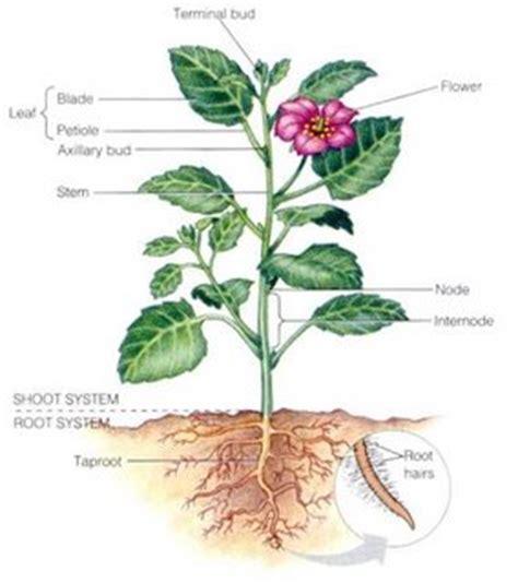 bagian tubuh tumbuhan berbagi ilmu