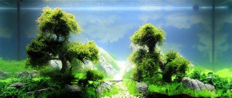 aquascape tree aquascape with underwater trees aquascape pinterest underwater aquariums and