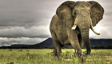 St Gajah gajah mu memahami gerakan manusia tanpa latihan asalasah