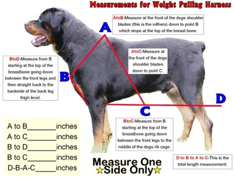 how to a to pull weight weight pulling vest weight pulling harness measurement for weight pulling