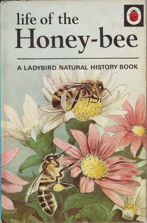 the bee book books vintage ladybird book of the honey bee