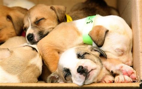 why are babies and puppies so cute? oxford researchers