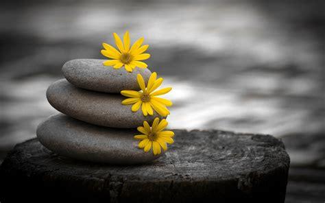 flower zen wallpaper zen stones 738588 walldevil