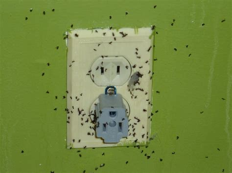 ants in the house ant exterminator nyc get rid of ants b d pest solutions llc