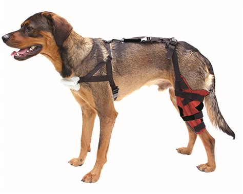 acl brace for dogs knee braces or supports images