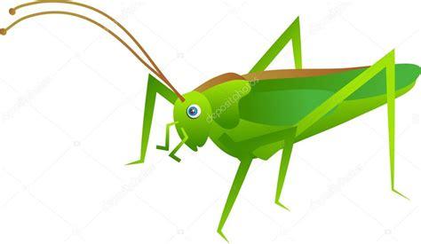 imagenes de grillos verdes ilustraci 243 n de un grillo verde vector de stock 169 prawny