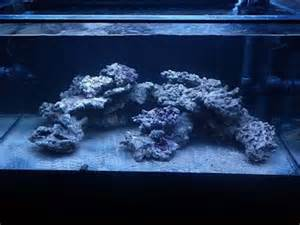 aquascaping reef search nano reef tank