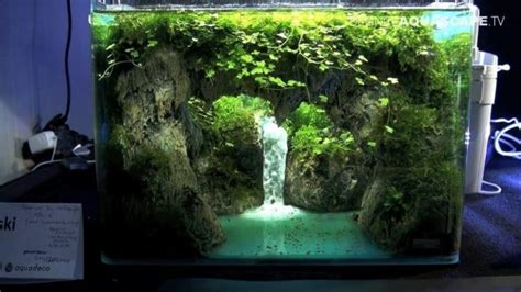 nano planted tank design inspirations  displayed