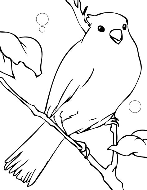 coloring pages canary bird canary coloring page handipoints