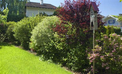 Pflanzen F R Hecke 640 by Hecke Pflanzen Planen Und Anlegen Mein Sch 246 Ner Garten