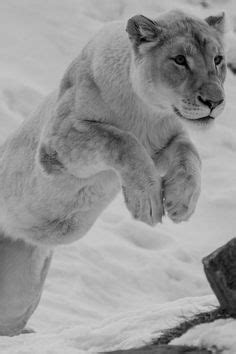 ~~Killer Queen ~ Barbary Lioness by ~Svenimal~~ | Animal