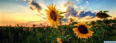 sunflower facebook cover timeline photo banner  fb