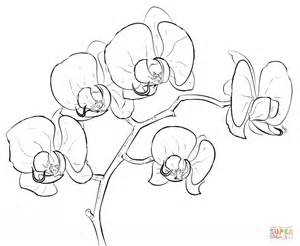 Orchid Coloring Page Free Printable Coloring Pages Orchid Coloring Pages