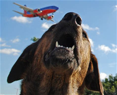 airlines that allow dogs how to choose between friendly airlines