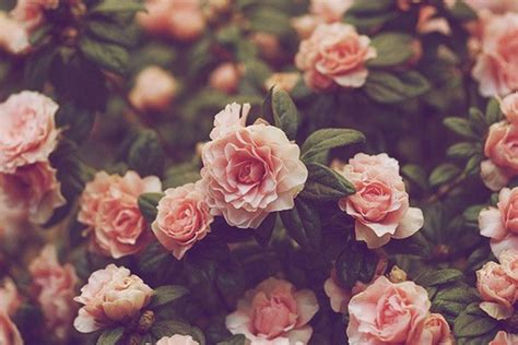 flower wallpaper tumblr hd vintage flower wallpapers tumblr group 36