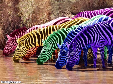 what color is a zebra gums pictures freaking news