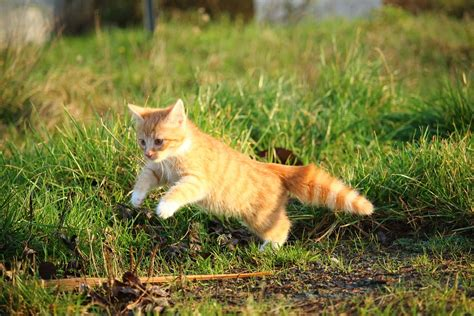 Free photo: Cat, Kitten, Cat Baby, Young Cat   Free Image
