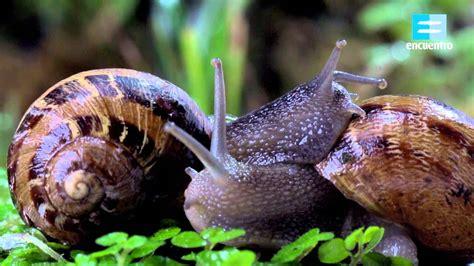imagenes de animales inbertebrados encuentro animal los invertebrados canal encuentro hd
