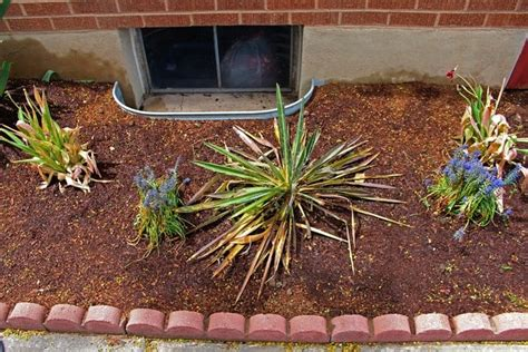 plants for north side of house bushes for side of house 28 images the essential steps to landscape design diy
