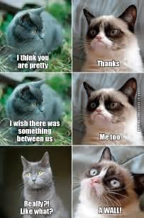 Grumpy cat meets crush maziel pinterest grumpy cat crush funny