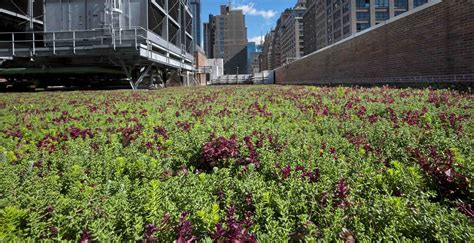 norquist green roof green roofs stormwater and el ni 241 o huffpost