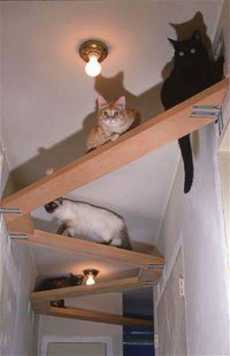 Cat Shelf Ideas by 25 Best Ideas About Cool Cats On Cool Stuff