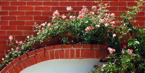 piante fiorite da vaso piante ricanti sempreverdi e fiorite