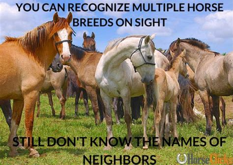 Funny Horse Memes - hilarious horse memes the original mane n tail animal