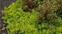 Vivaces Fleuries Tout L été by 10 Feuillages Pour Un Effet 171 Wow 187 Dans Votre Jardin