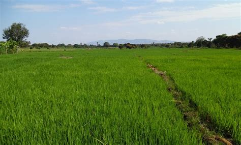 agriculture investment opportunities  comesa  big