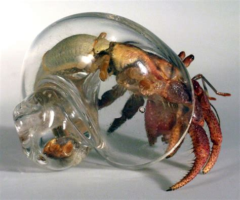 hermit crab heat l where do crabs come from