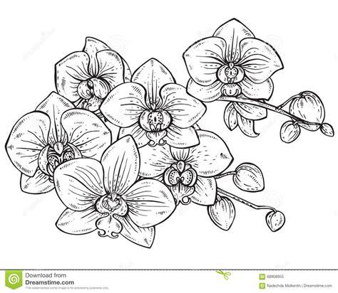 bloemen zwart wit tekening mooi zwart wit vector bloemenboeket van orchideebloemen