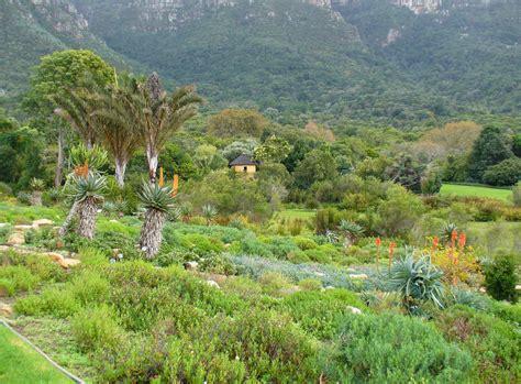 Kirstenbosch National Botanical Garden Cape Town Kirstenbosch National Botanical Gardens Cape Town Park Forest