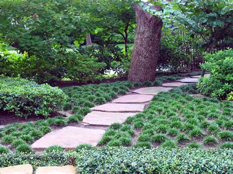 lawn alternativesdesign outdoor landscaping wonderful mondo grass for