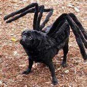 black pug spider costume pug costumes on pug pug costumes and pug costume