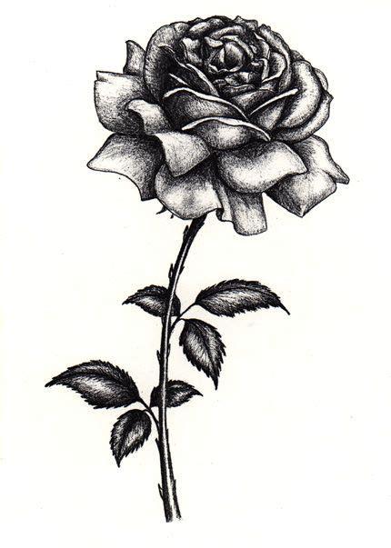 rose hill tattoo shop drawings in pencil portraits trista hill