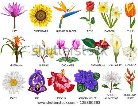 download spider and flower wallpaper 1920x1080 wallpoper 448849