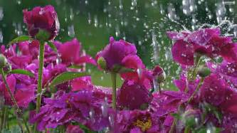 Safety Vase Spring Rain Desktop Wallpaper Wide Screen Wallpaper